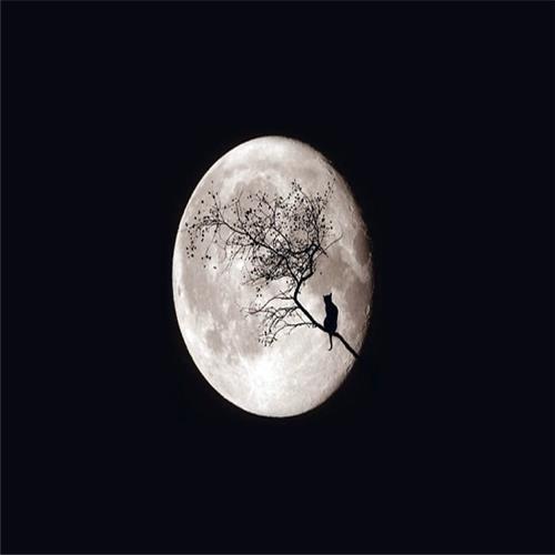 mooncat3